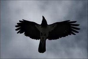Примета Птица залетела в окно