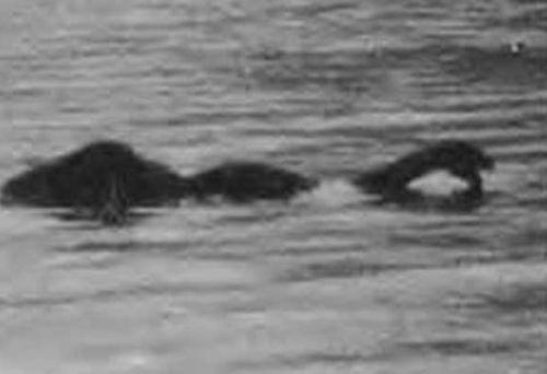 Реальные фото Лохнесского чудовища