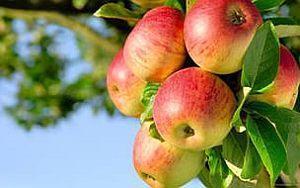 Ритуалы на фрукты