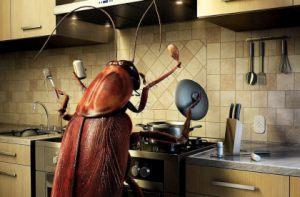Как избавиться от тараканов заговором