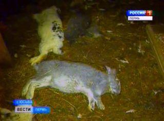События в России