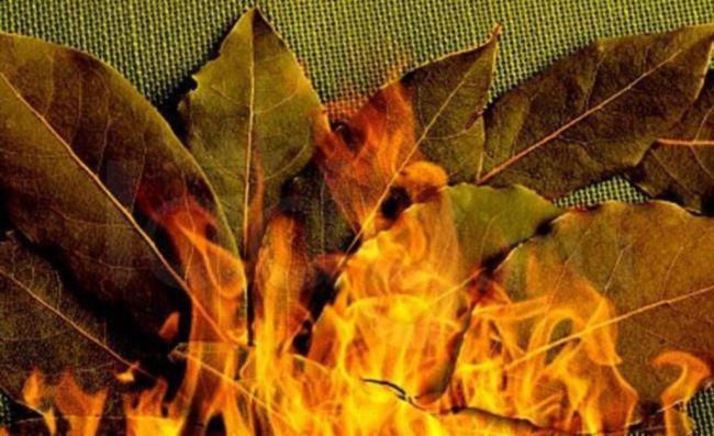 Загадать желание на лавровый лист и сжечь его