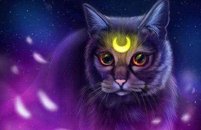 как вызвать кота желаний