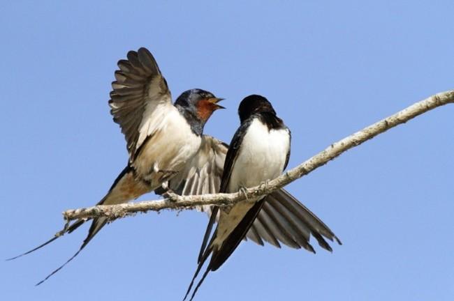 Поведение птиц на Благовещение