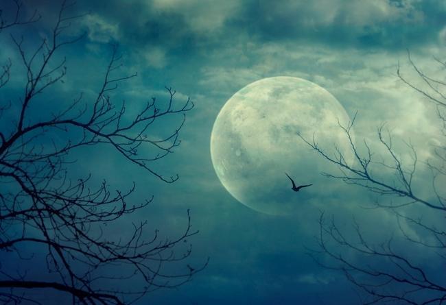 на луну, на лук, по фото